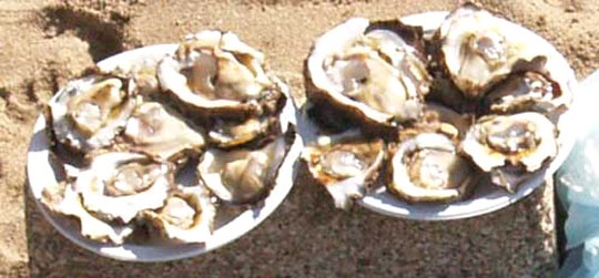 oysters5a-web