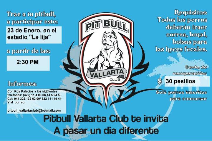 Pit bull show vallarta